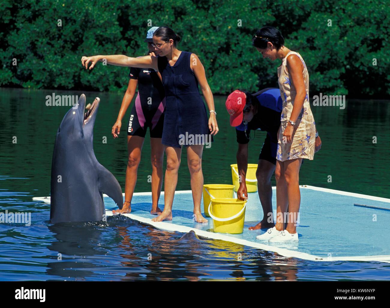 Delphin Show, Varadero, Cuba - Stock Image