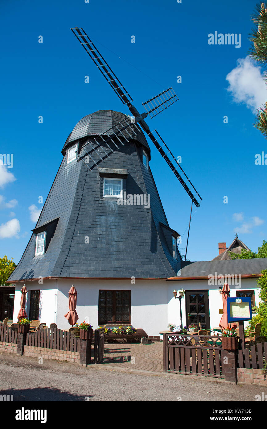 Restaurant and Cafe Muehlenstube' in a old windmill, village Born at Darss, Fischland, Mecklenburg-Western Pomerania, - Stock Image