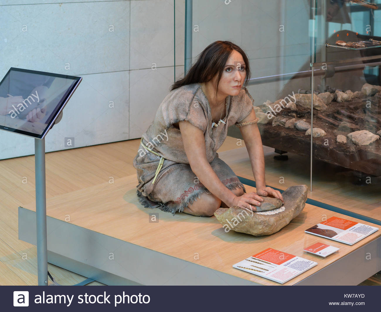 a realistic reproduction of a prehistoric woman in the permanente exhibition of the famous Science Museum of Trento. - Stock Image