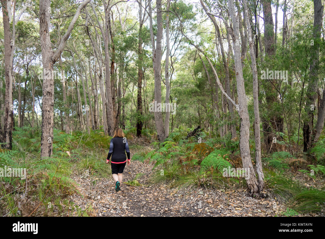 A woman walking along a track through a eucalyptus forest in Margaret River, Western Australia. Stock Photo