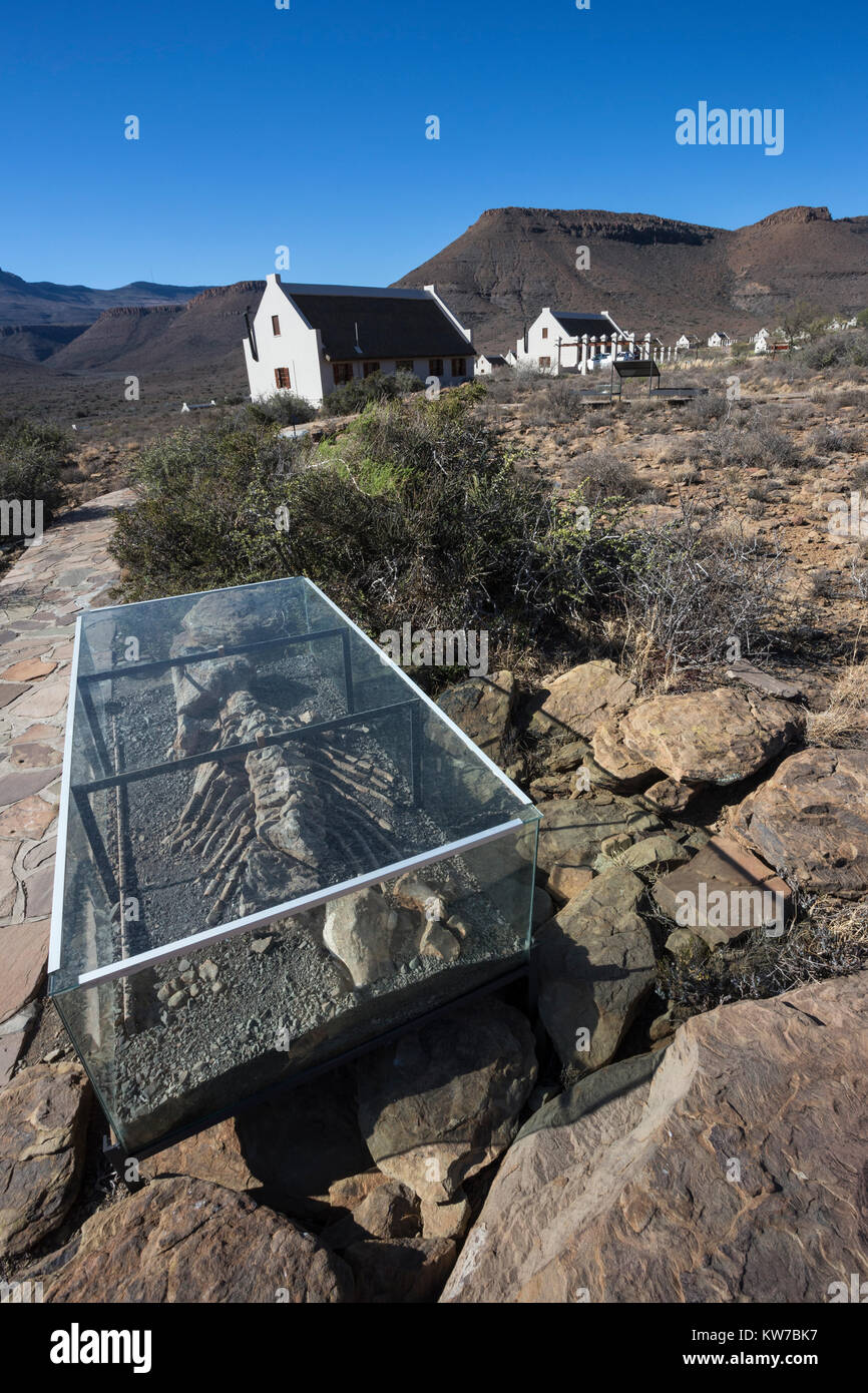 Fossil trail, with reproduction Bradysaurus skeleton, Karoo national park rest camp, Western Cape, South Africa, - Stock Image