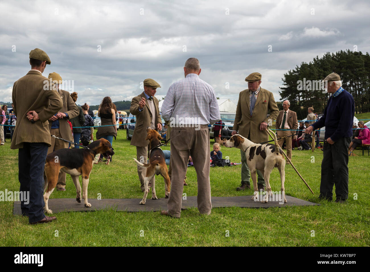 Judging fox hounds, Bellingham Show, Bellingham, Northumberland, UK, August 2017 - Stock Image
