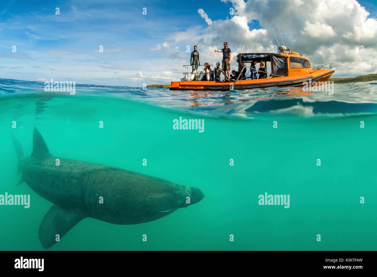Basking Shark Encounter - Stock Image