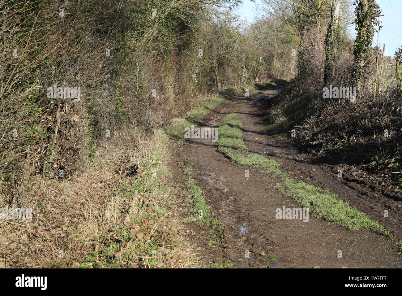 A country lane/bridleway known as 'Milking Lane' in Witney - Stock Image