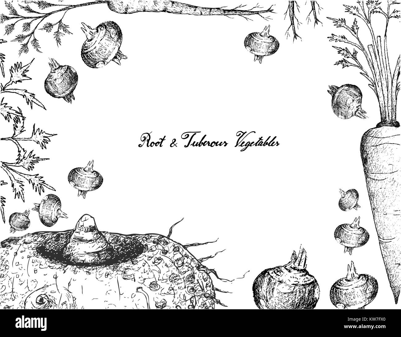 Root and Tuberous Vegetables, Illustration Frame of Hand Drawn Sketch of Water Chestnut, Hamburg Parsley, Elephant - Stock Vector
