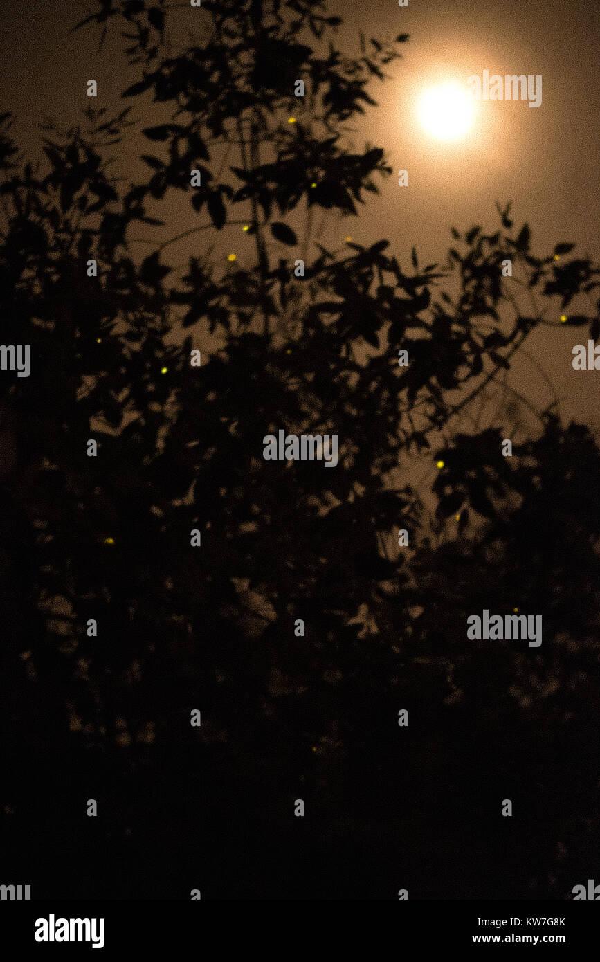 A Grainy Night Silhouette (Bukit Banting) - Stock Image