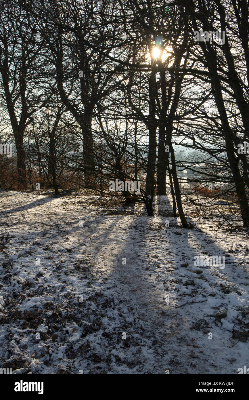 The woods on a snowy day in winter at Rawdon Billing, Nr Leeds, North Yorkshire - Stock Image