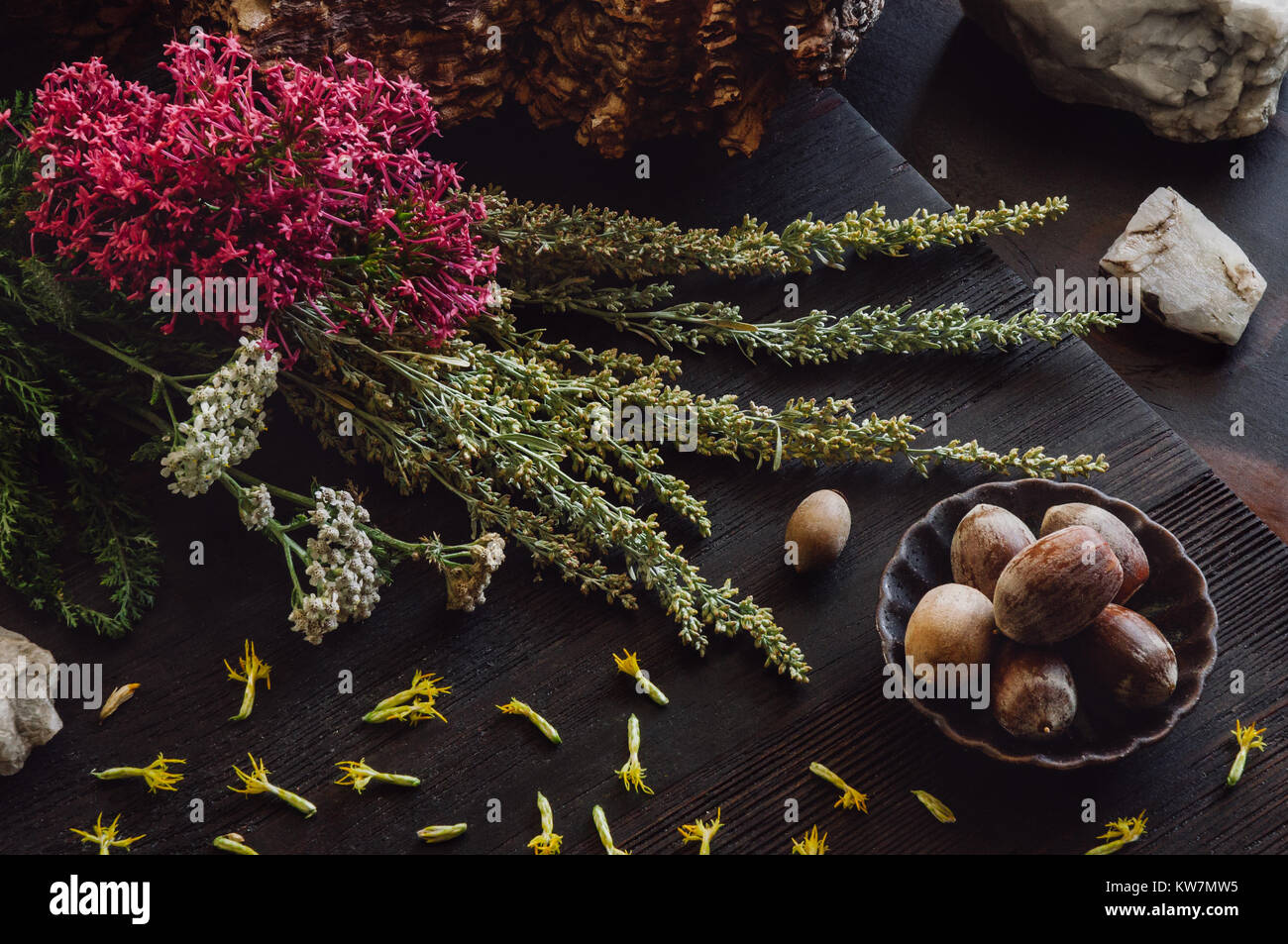 Autumn Collection with Acorns, Quartzsite and Herbs - Stock Image