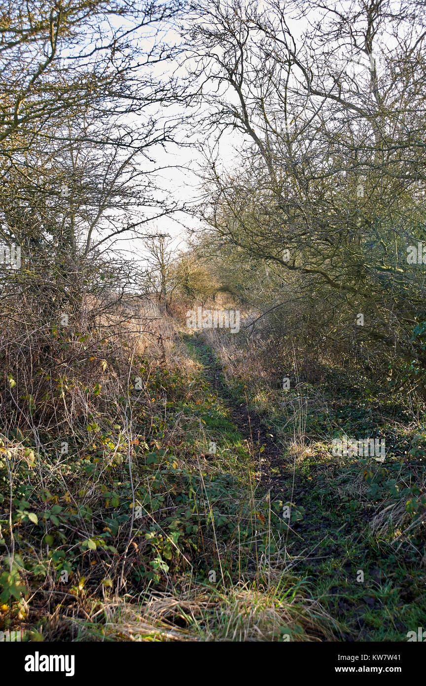 Old Towpath on the Driffield navigation canal - Stock Image