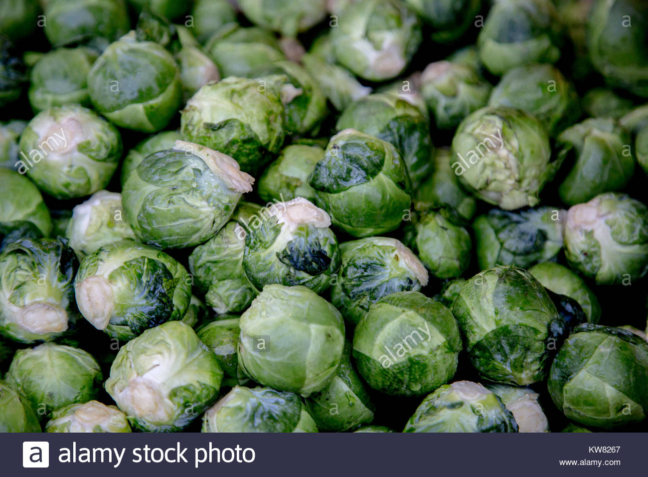 Sprouts - Stock Image