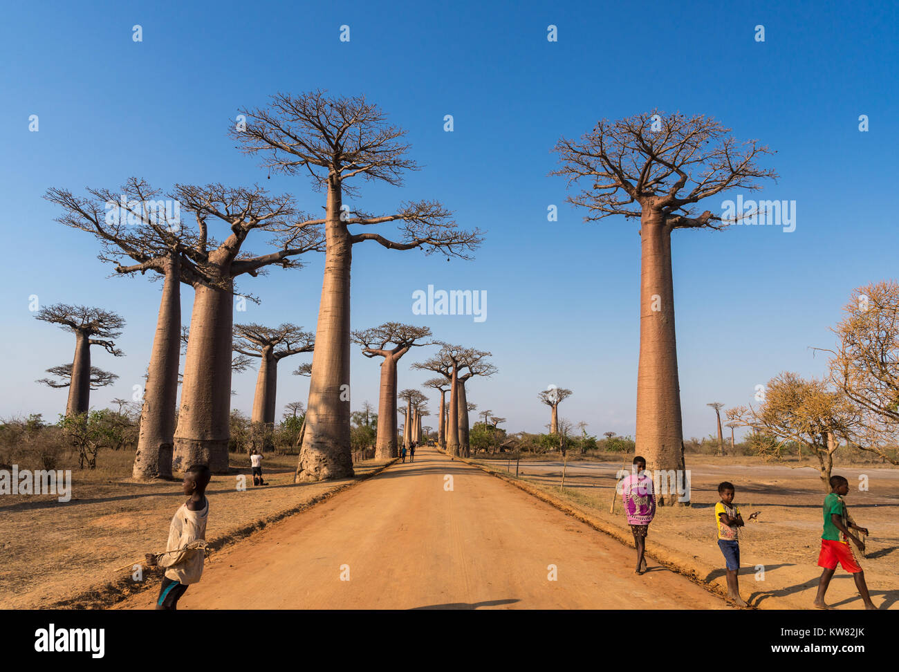 Local kids interact with tourists along the Avenue of Baobabs. Madagascar, Africa. - Stock Image
