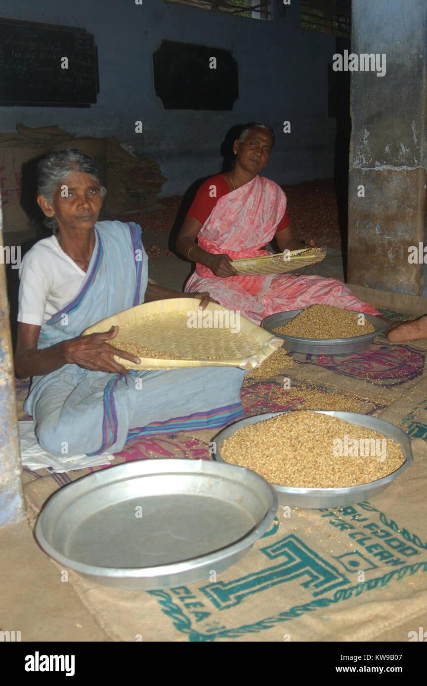 TAMIL NADU, INDIA, circa 2009: Unidentified women cleaning