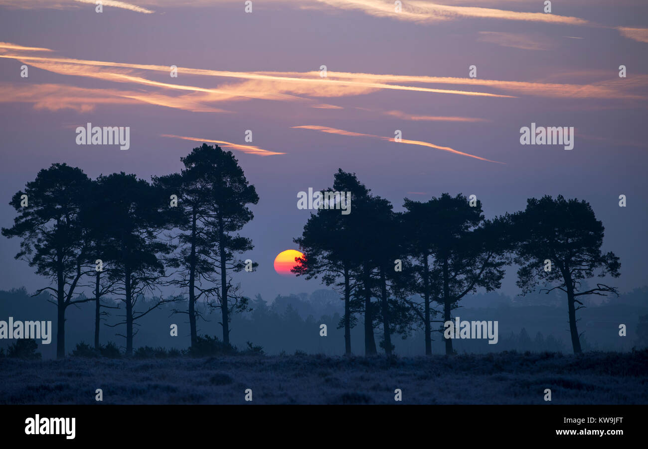 Sunrise in the New Forest Stock Photo