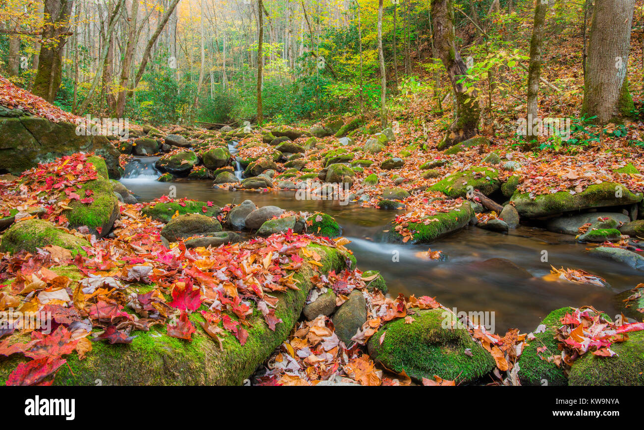 Roaring Fork Stream, Autumn, Great Smoky Mountains NP, TN USA, by Bill Lea/Dembinsky Photo Assoc - Stock Image