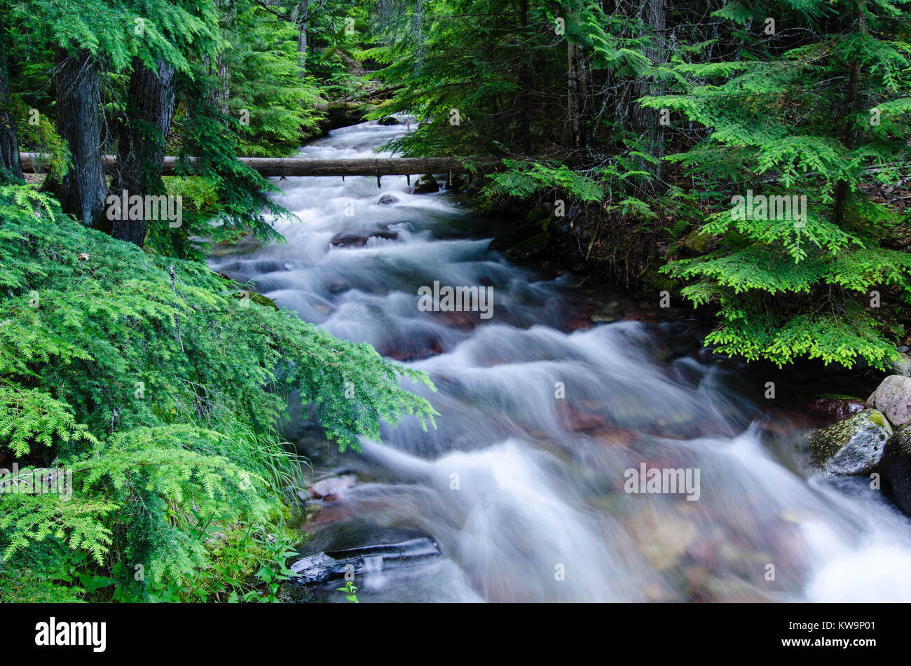 The swift waters of Jackson Creek flow thru the forest of Glacier National Park before it empties into Lake McDonald. - Stock Image