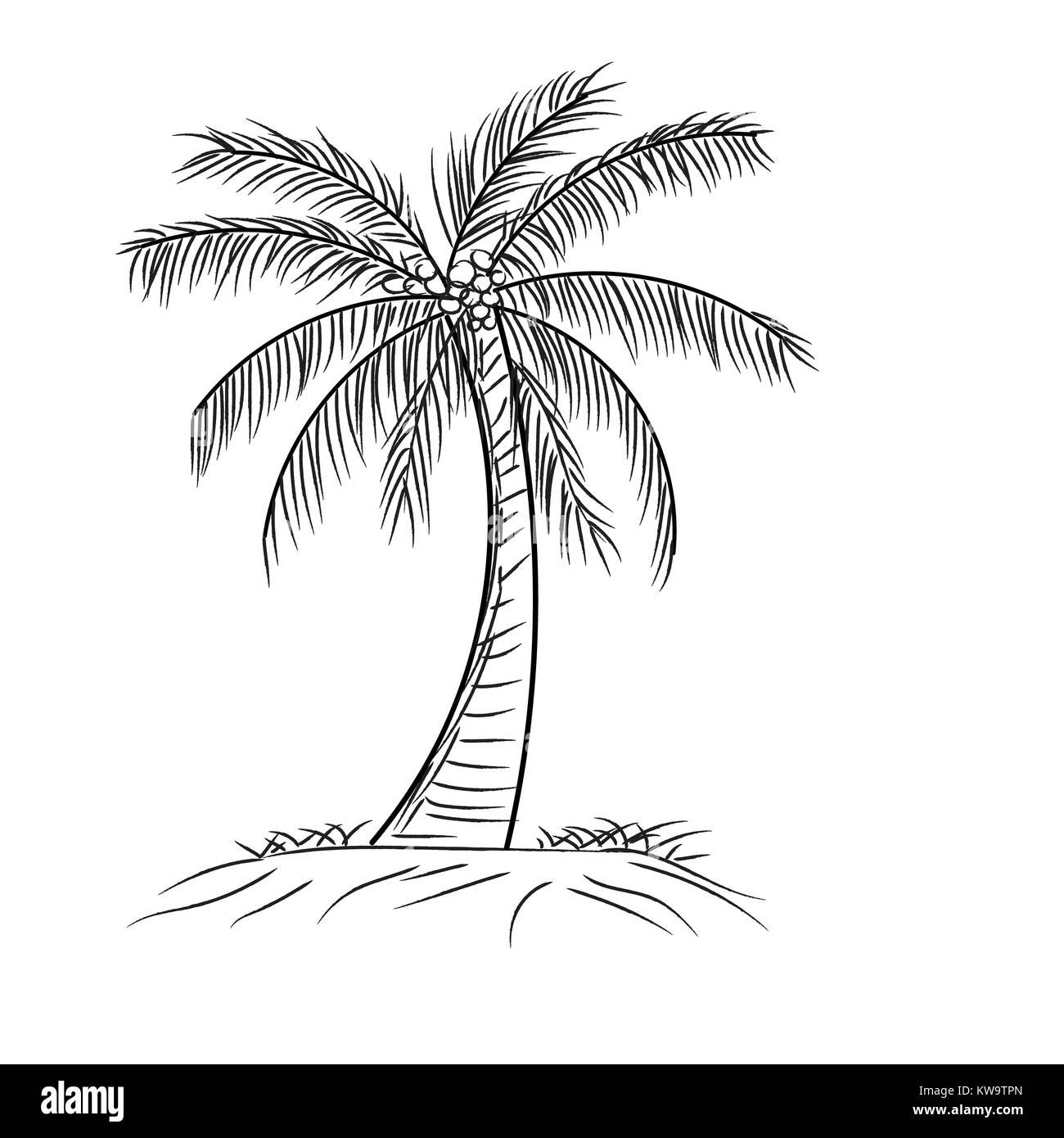 Palm tree coconut with leaves hand drawn style design in outline monochrome contour on white