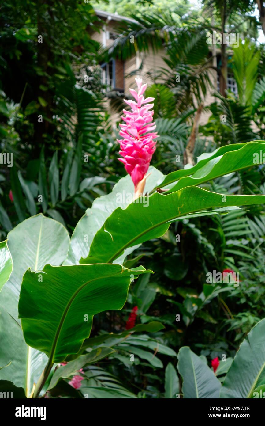 Konoko Falls and Tropical Gardens, Ocho Rios, Jamaica. - Stock Image