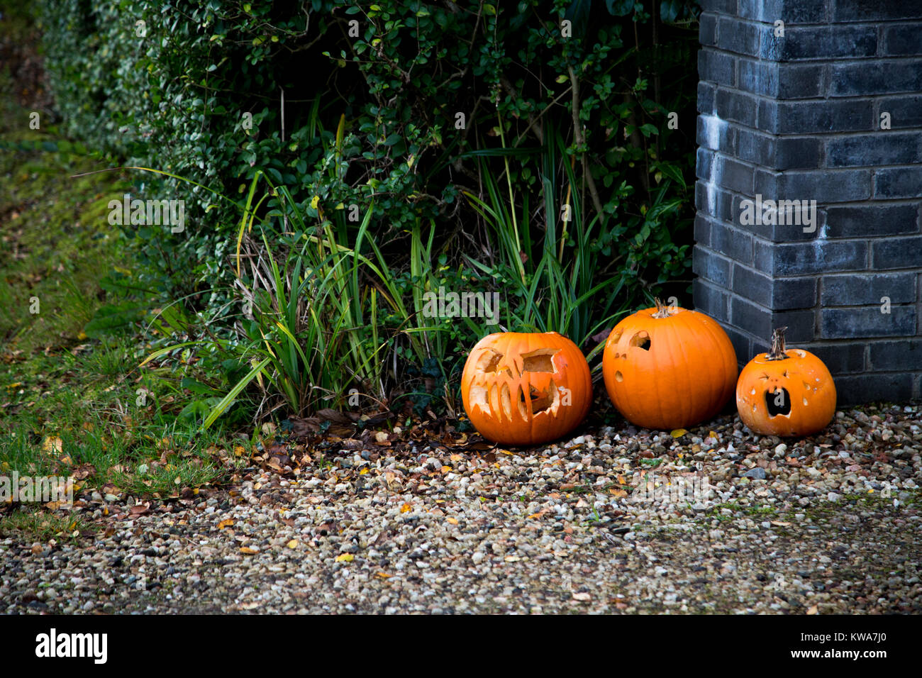 Three carved pumpkins in daylight - Stock Image