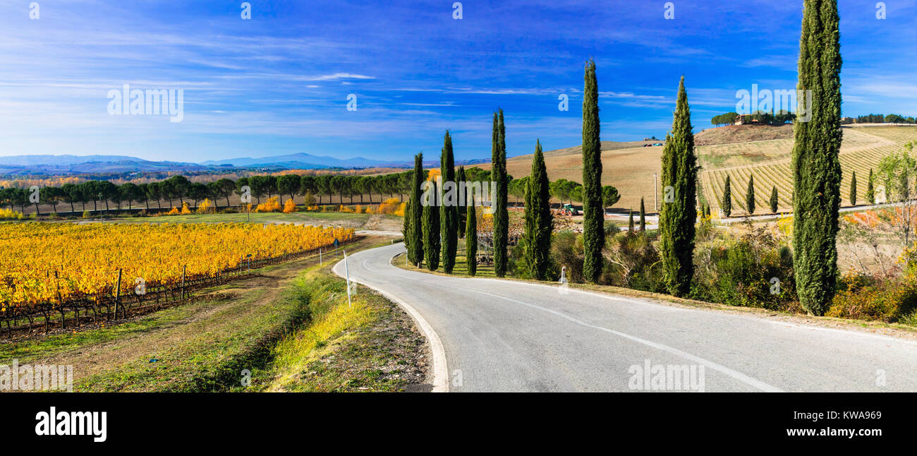 Impressive autumn landscape,view with vineyards and cypresses,tuscany,italy. - Stock Image