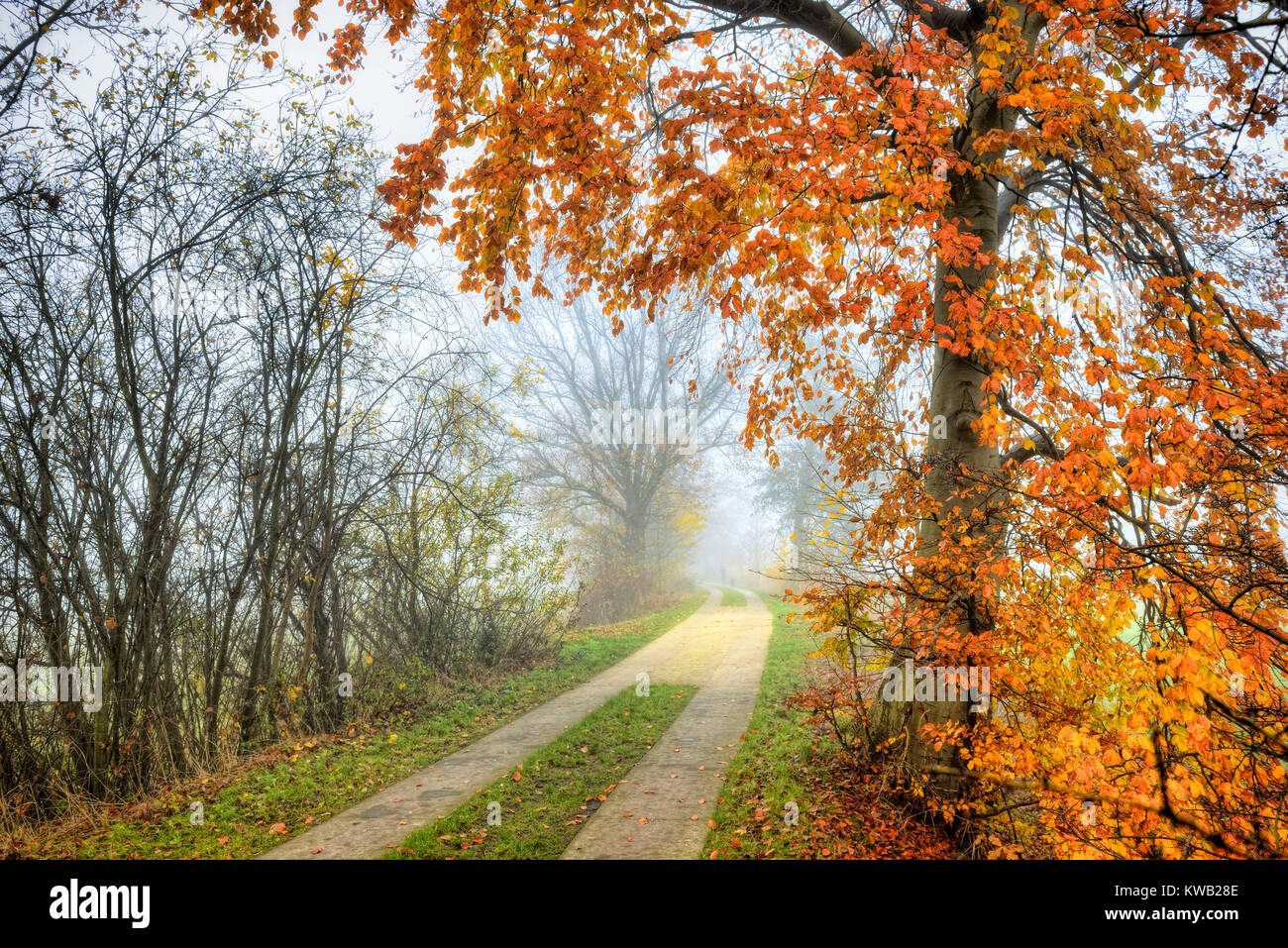 Autumnal view of the march railway embankment in Kirchwerder, 4 and marshy land, Hamburg, Germany, Europe, Herbstliche Stock Photo