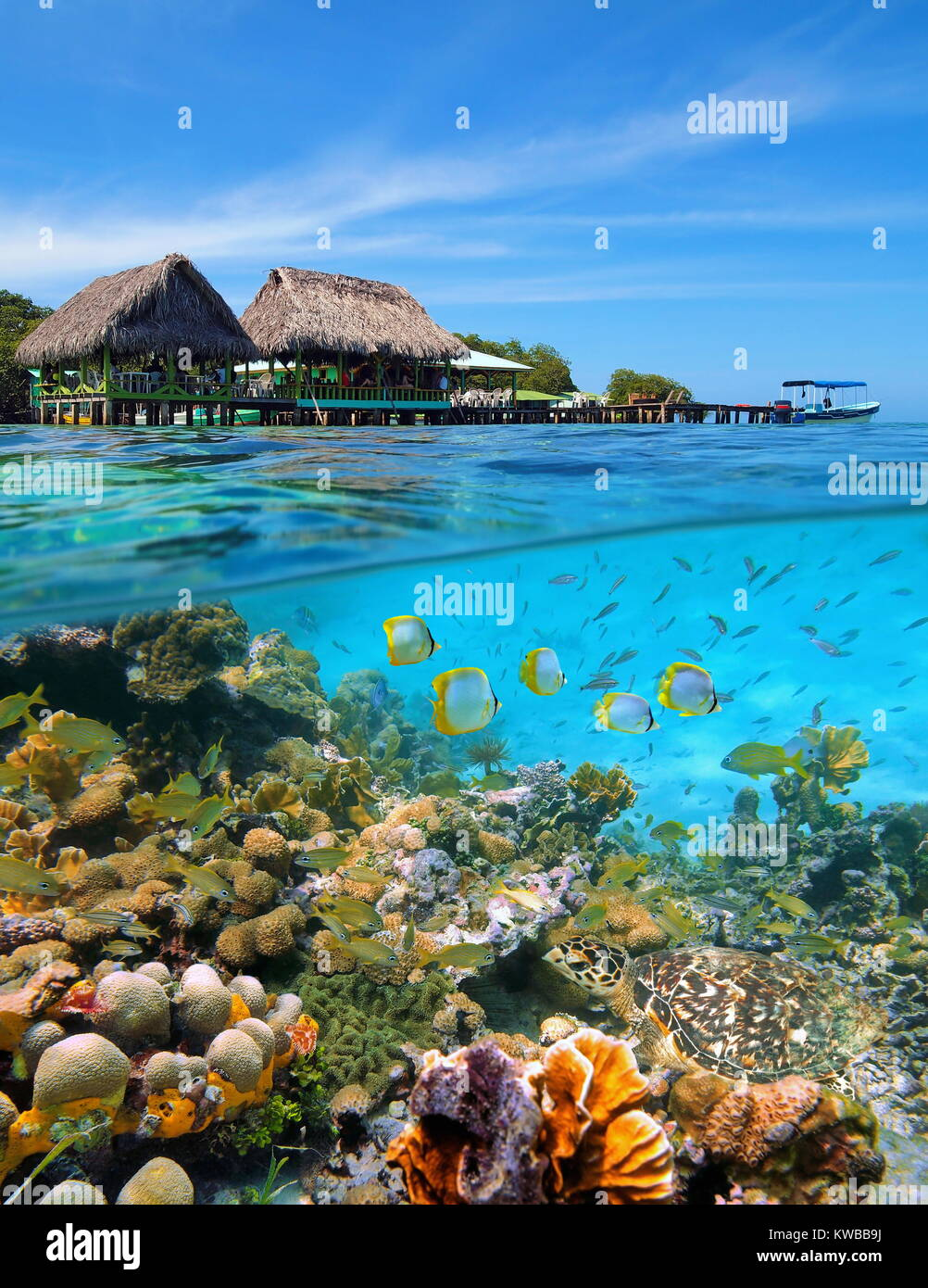 A tropical restaurant with thatched huts over the water and a thriving coral reef with fishes and a sea turtle underwater, Caribbean sea, Panama Stock Photo