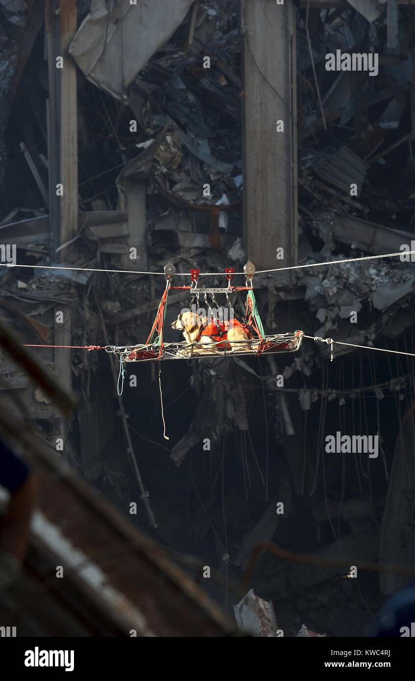 A rescue dog is transported out of the debris of the World Trade Center, Sept. 15, 2001. New York City, after September - Stock Image