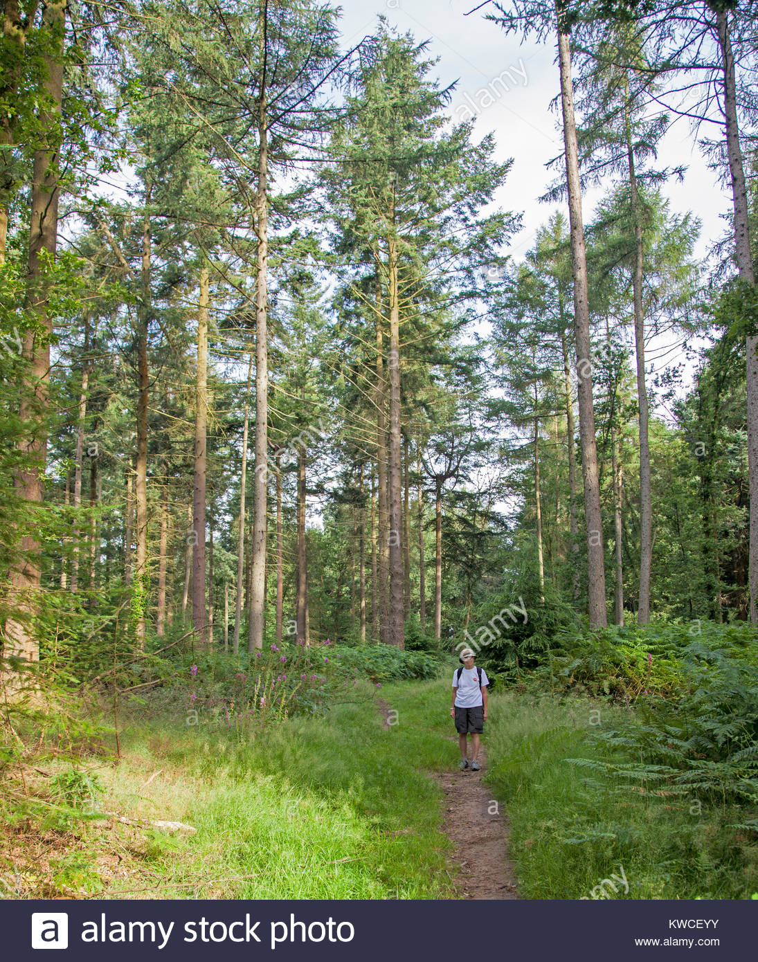 Lone walker on Ruardean Hill in the Forest of Dean - Stock Image