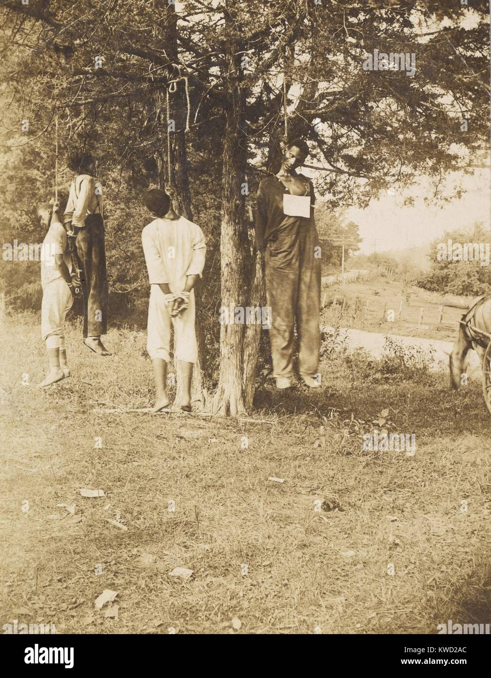 Four lynched black sharecroppers, arrested for 'disturbing the peace in Russellville, KY, Aug. 1908. Their offense - Stock Image