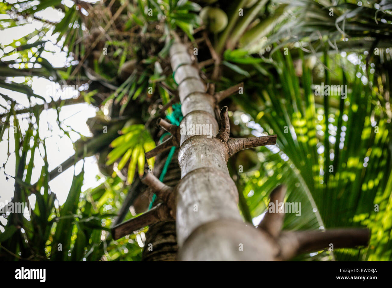 Bamboo Ladder Stock Photos & Bamboo Ladder Stock Images - Alamy