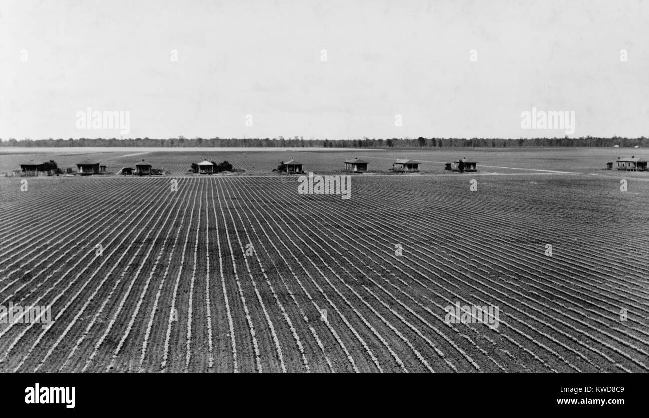 Tenant farmer's houses on a cotton plantation in Rolling Fork, Mississippi, May 1940. The small homes have out - Stock Image