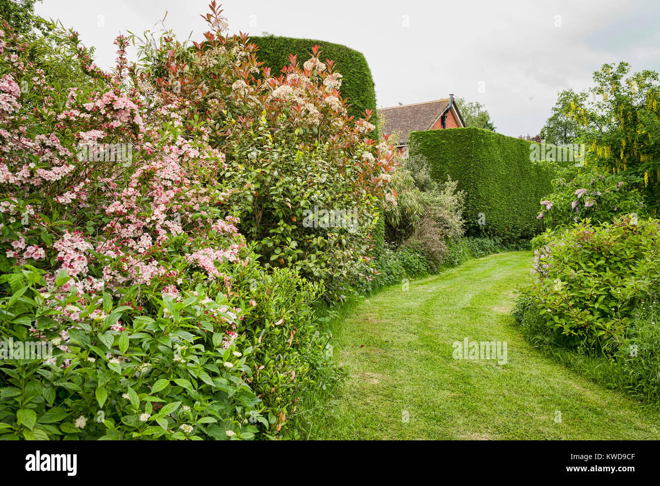 Wide grass path linking tow separate parts of an English garden; flanked by a variety of flowering trees and shrubs - Stock Image