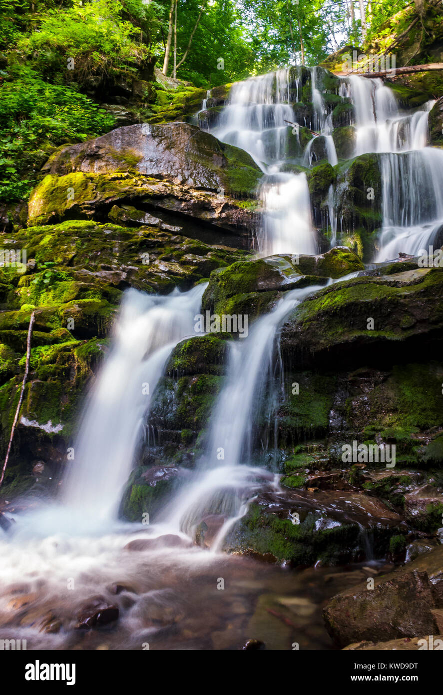 Cold Waters Of Mighty Waterfall Shypot Beautiful Nature Summer Scenery Among Forest One The Most Visited Locations In Carpathian Mountains Ukr