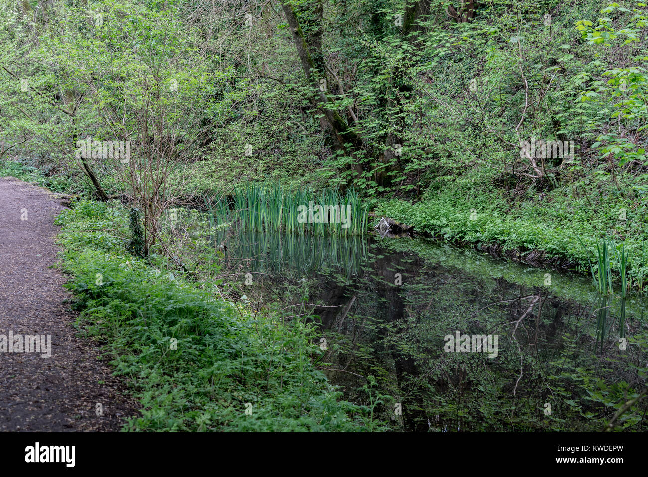 Towpath along the disused Severn and Thames Canal near to Chalford, Stroud, Gloucestershire, UK - Stock Image