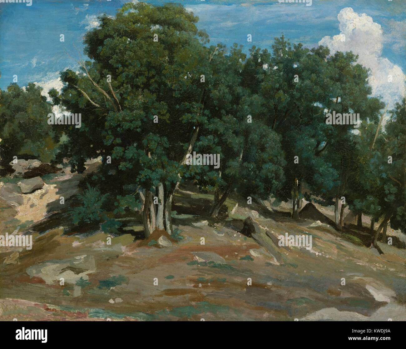 FOUNTAINEBLEAU: OAK TREES AT BAS-BREAU, by Camille Corot, 1832-33, French painting, oil on paper. Corot painted - Stock Image