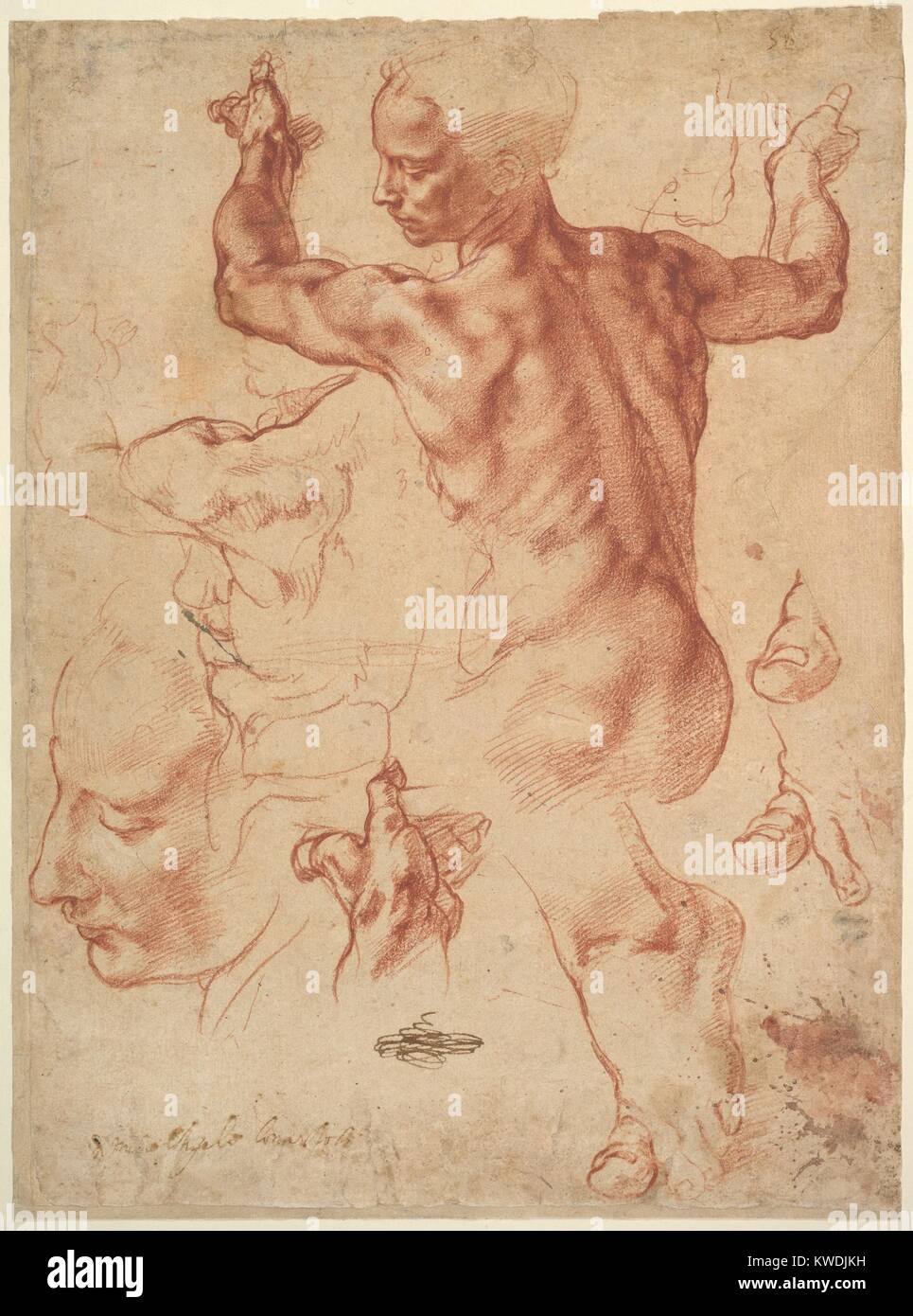 STUDIES FOR THE LIBYAN SIBYL, by Michelangelo, 1510–11, Italian Renaissance chalk drawing. Preparatory drawing for - Stock Image