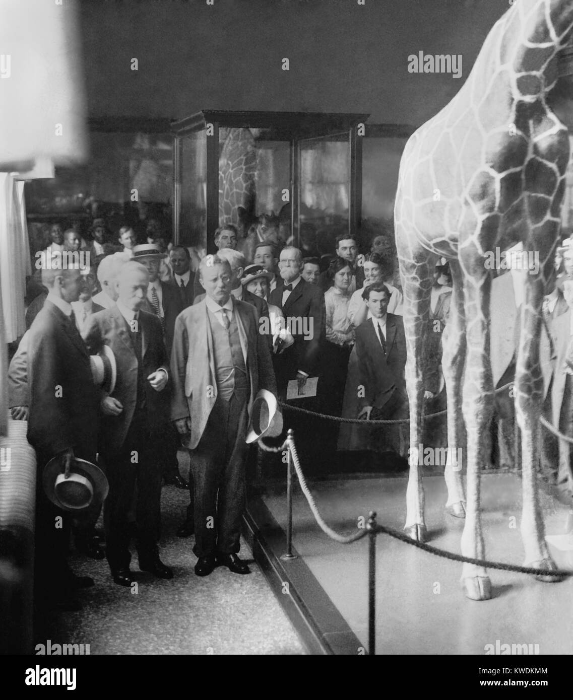 Col. Theodore Roosevelt at a ceremony at National Museum, c. 1914-1917. Now called the Smithsonian Museum of Natural - Stock Image