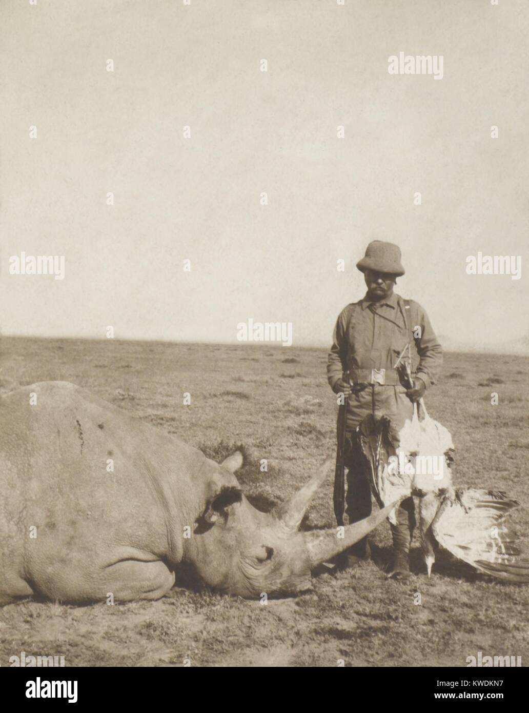 Theodore Roosevelt holding a dead bustard and standing next to a dead rhinoceros. Aug.-Dec. 1909 during the Smithsonian–Roosevelt - Stock Image