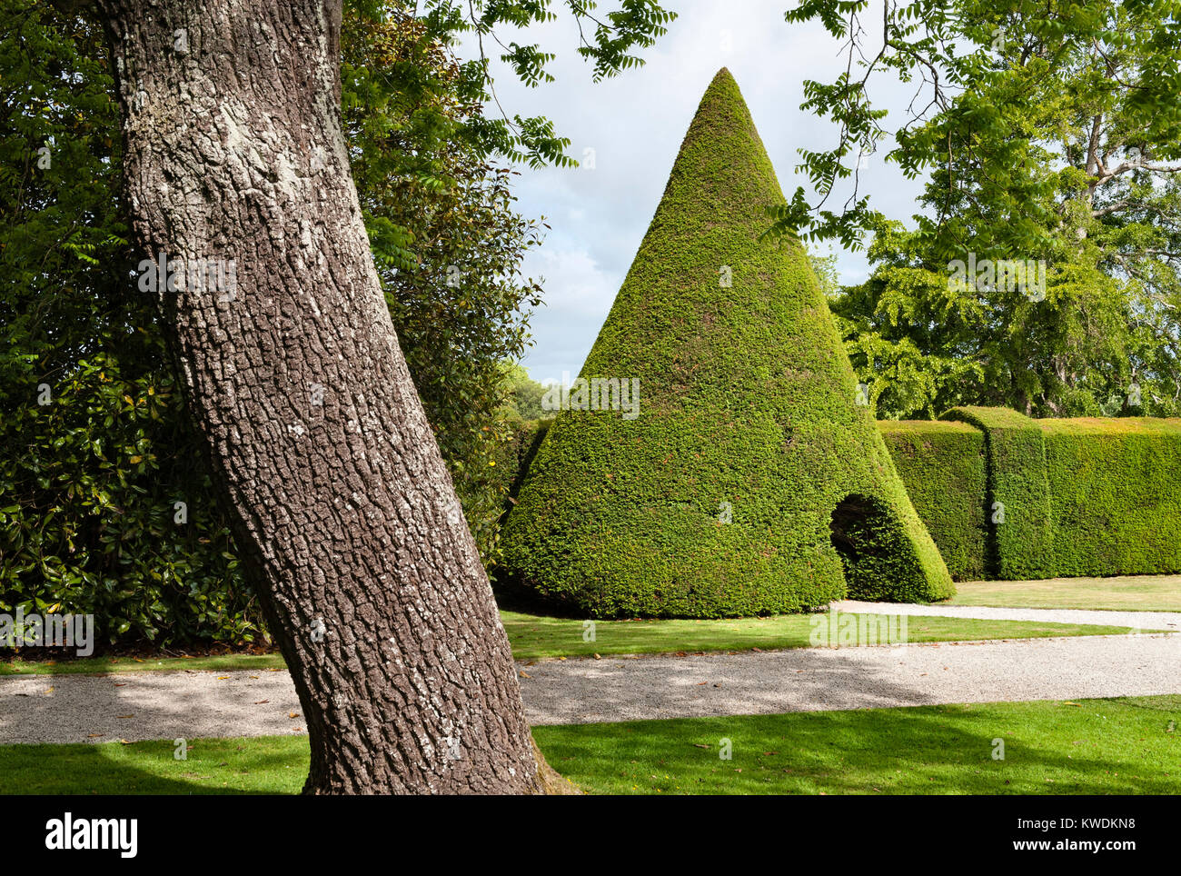 Antony House, Torpoint, Cornwall, UK. A 10m high topiary cone in clipped yew in the formal gardens near this 18c - Stock Image