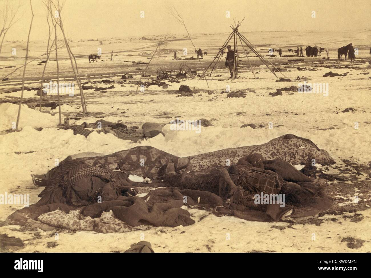 Several dead Lakota Sioux are wrapped in blankets after the Wounded Knee Massacre of Dec. 29, 1890. Bodies lay on Stock Photo