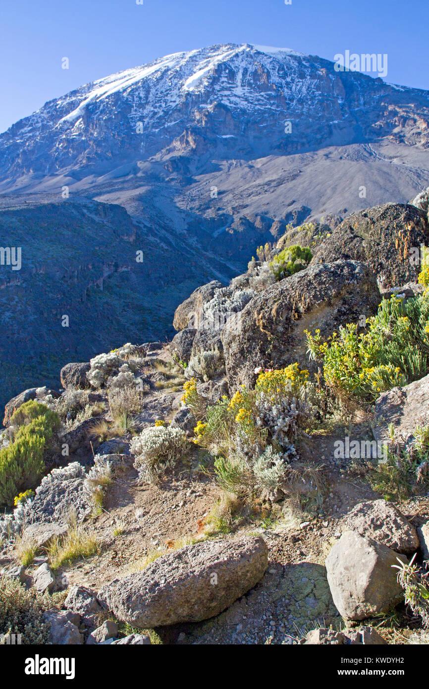 Mt Kilimanjaro - Stock Image