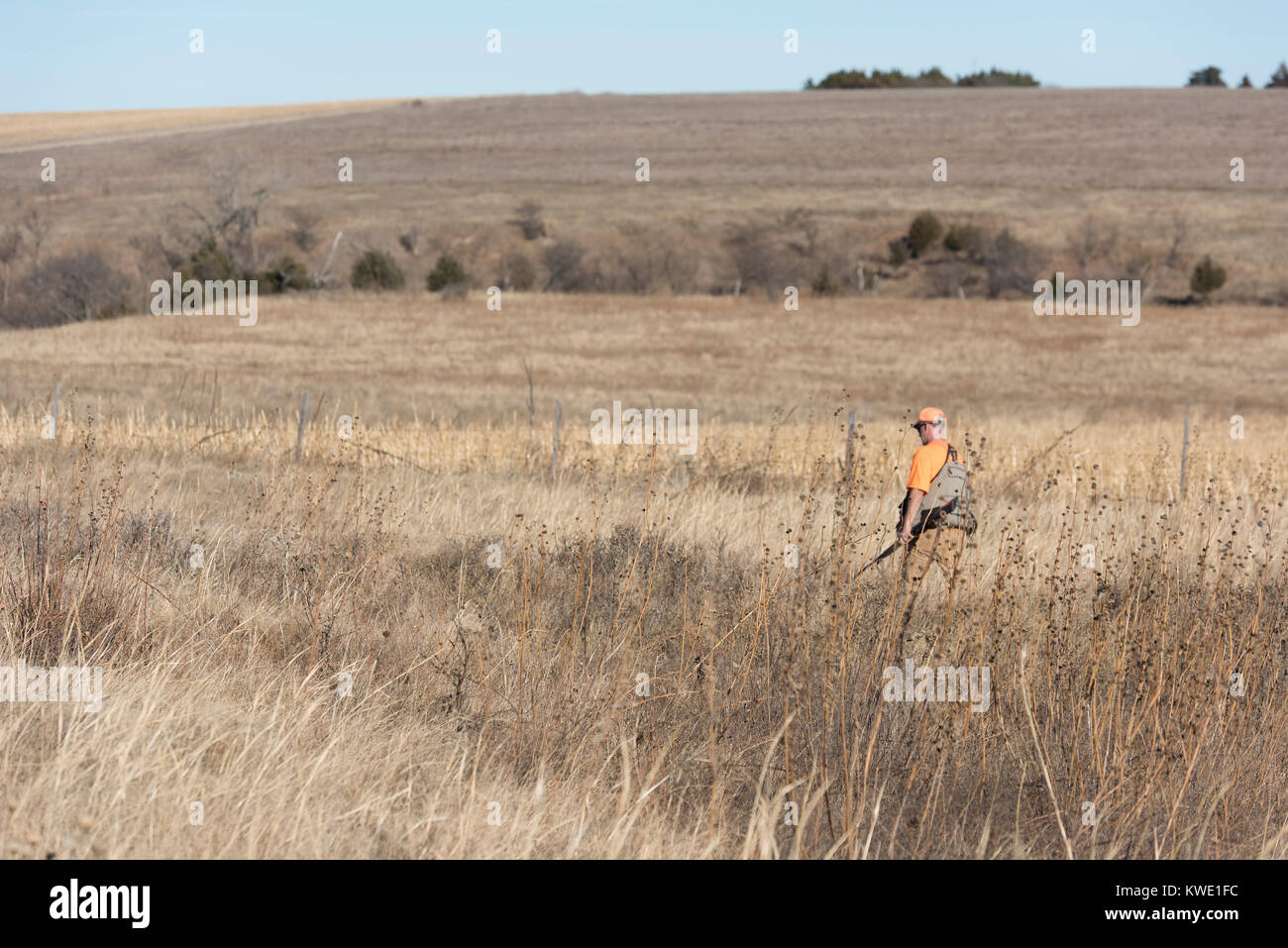 A quail hunter in Kanas on a late autumn afternoon - Stock Image