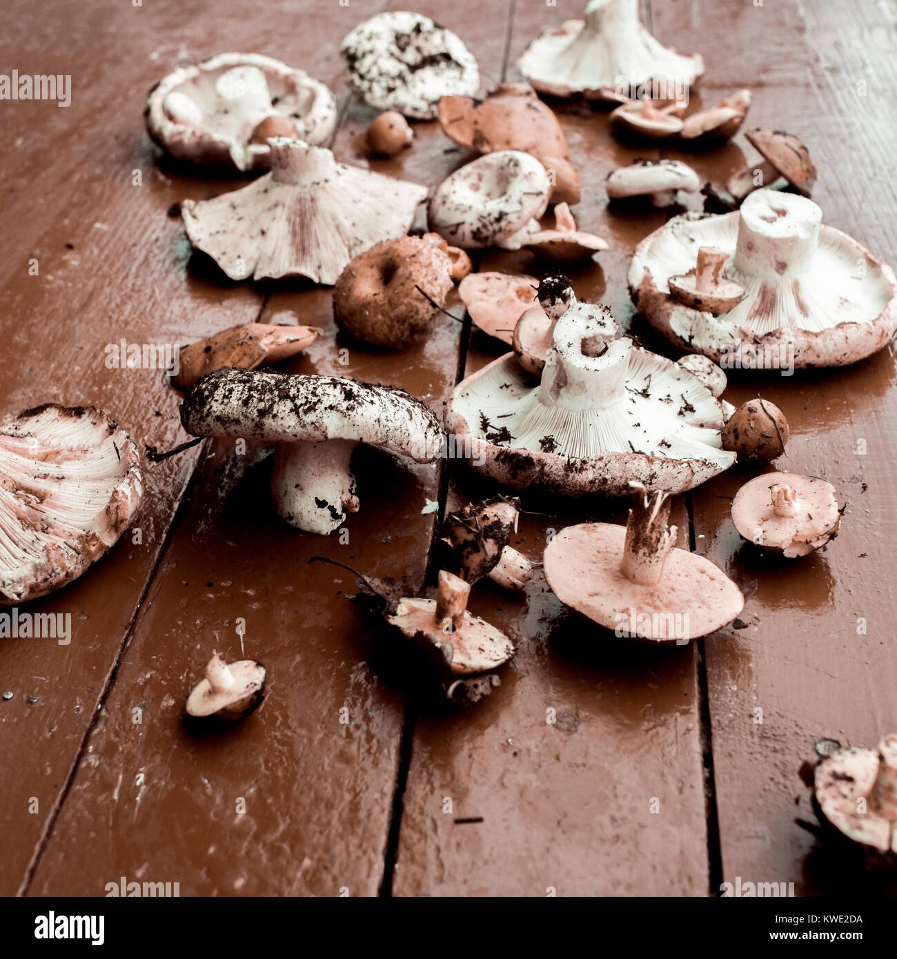 Close-up of mushrooms on wooden table - Stock Image