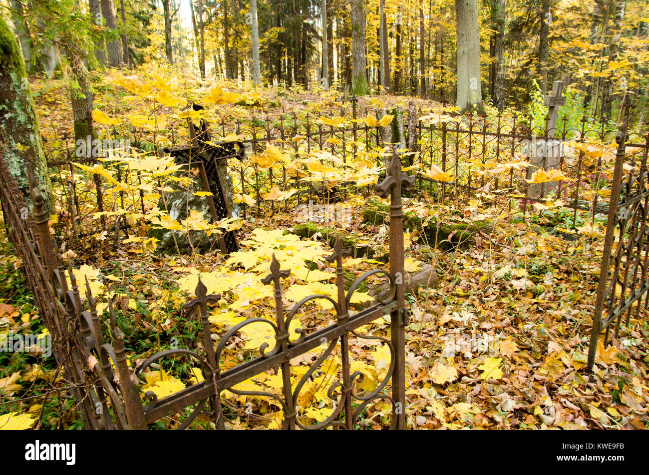 A shot of an old cemetary graveyard in the woods with crooked rusty metal cross and fence around it with yellow Stock Photo