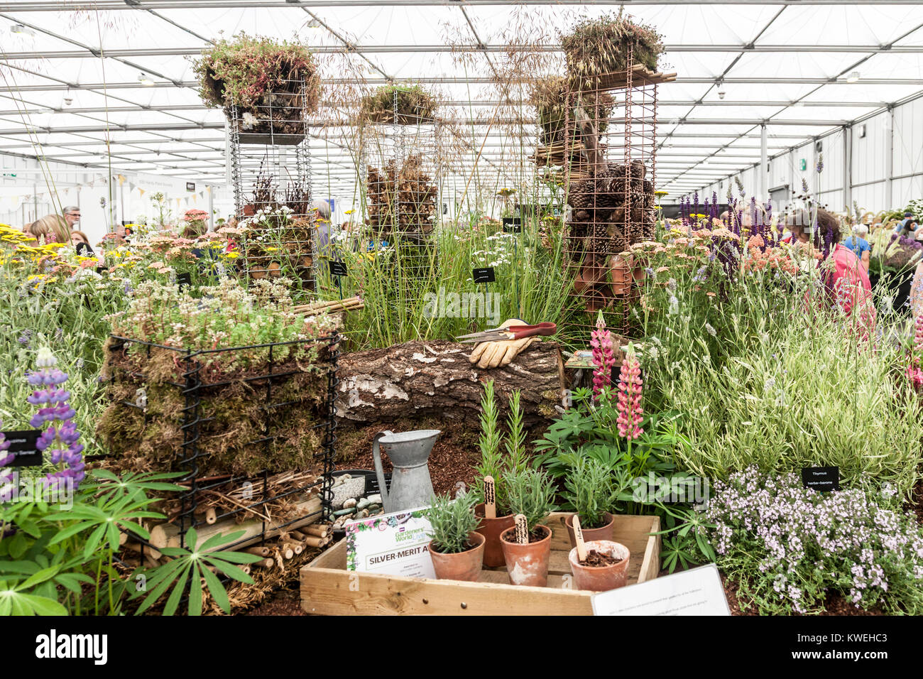 Silver-Merit award winning display of Plants for Pollinators by John Cullen Gardens at Gardeners' World Live - Stock Image