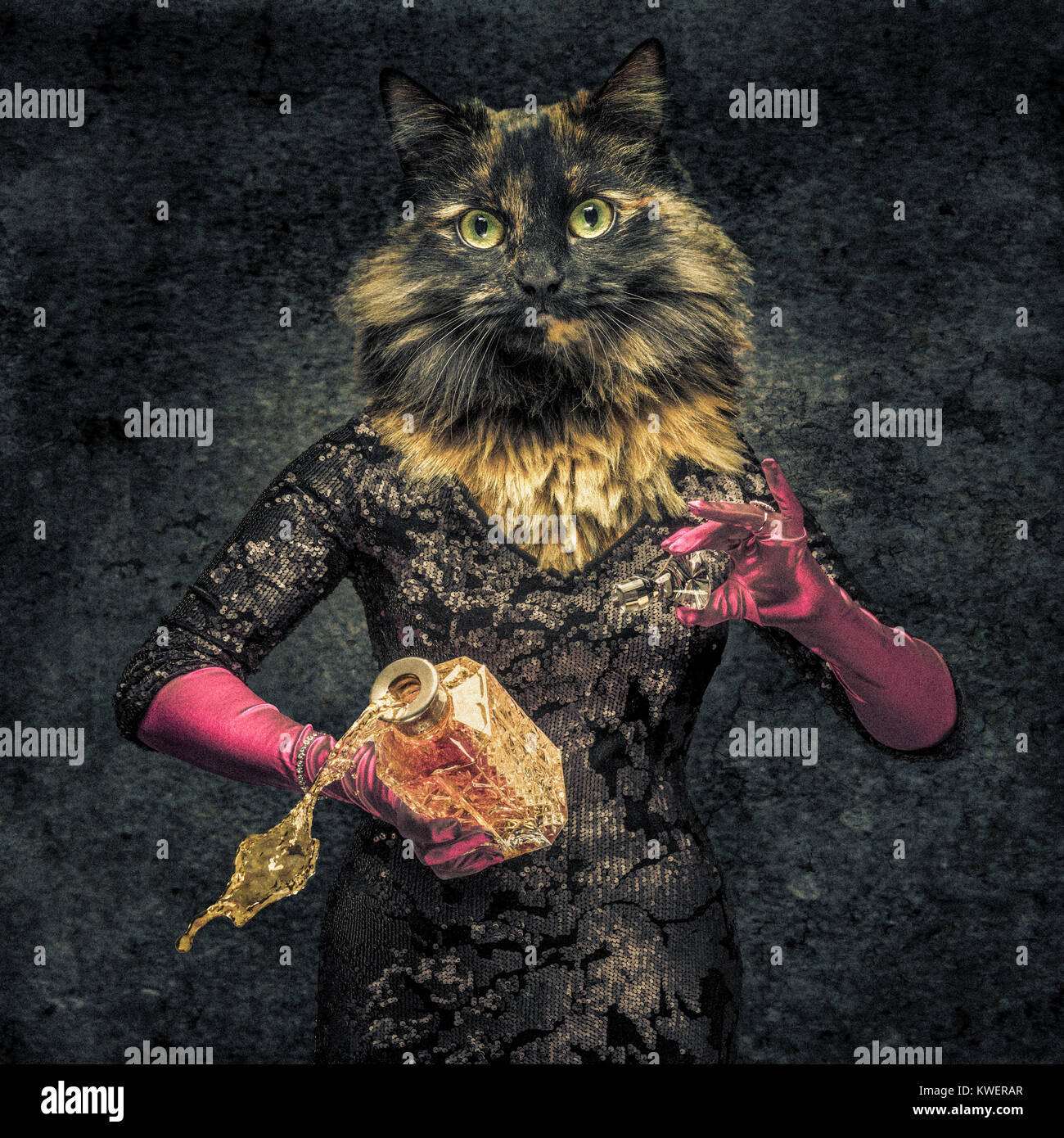 Human body with cat head hybrid creature holding decanter with drink spilling out. - Stock Image