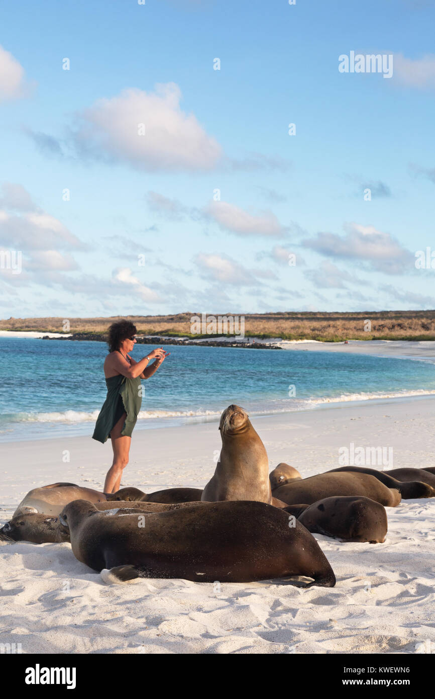 Galapagos tourist taking a photo of Sea Lions, Gardner Bay, Espanola Island, Galapagos National Park, Galapagos - Stock Image