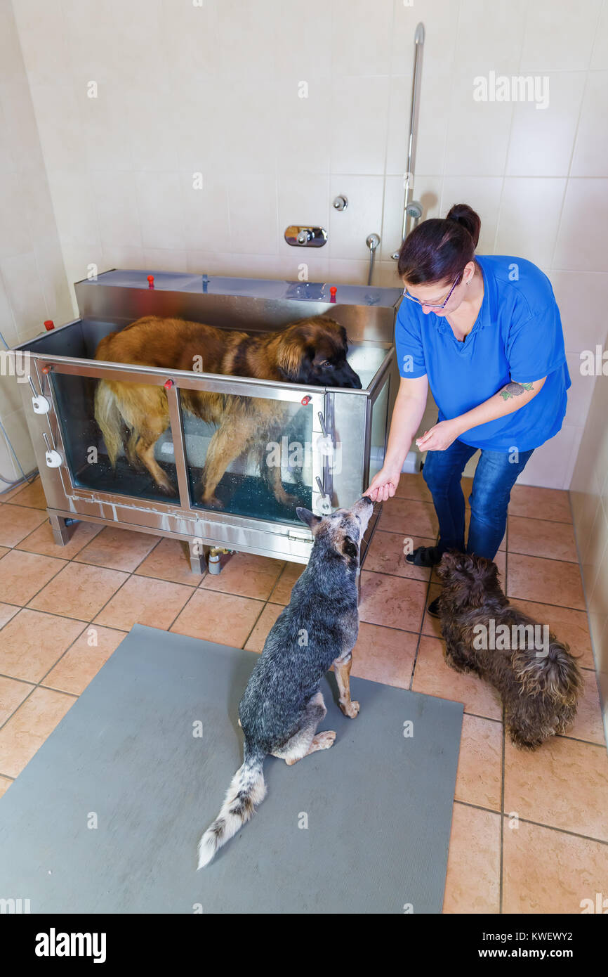 picture of a woman who works with dogs at a hydrotherapy station Stock Photo