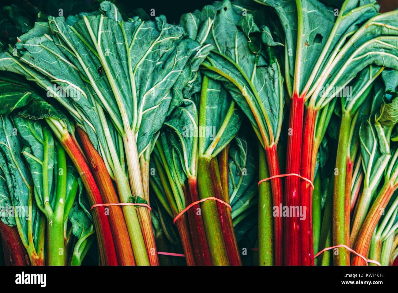 Rhubarb leaves Stock Photo