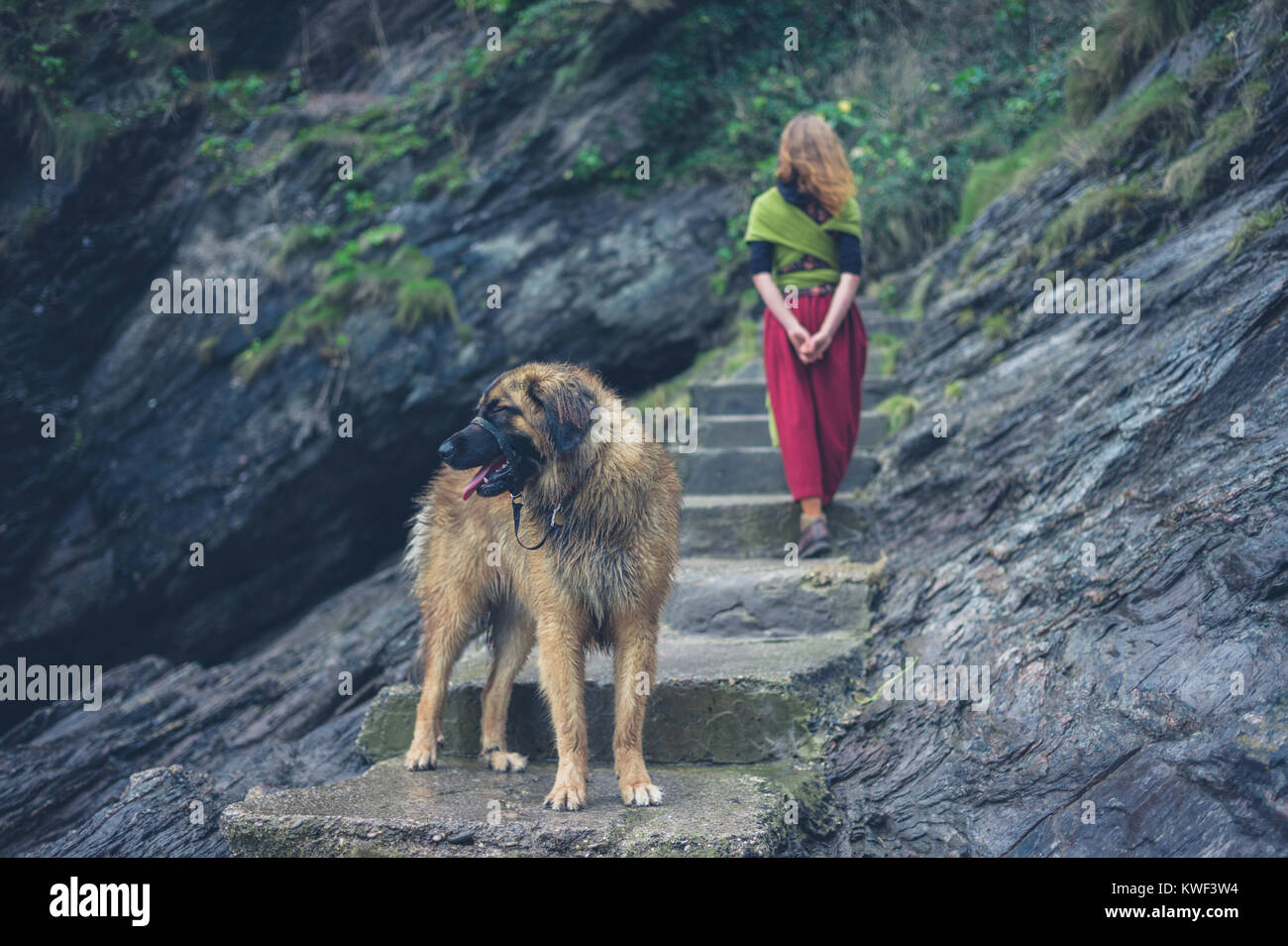 A young woman is walking up some steps outside in nature with her dog - Stock Image