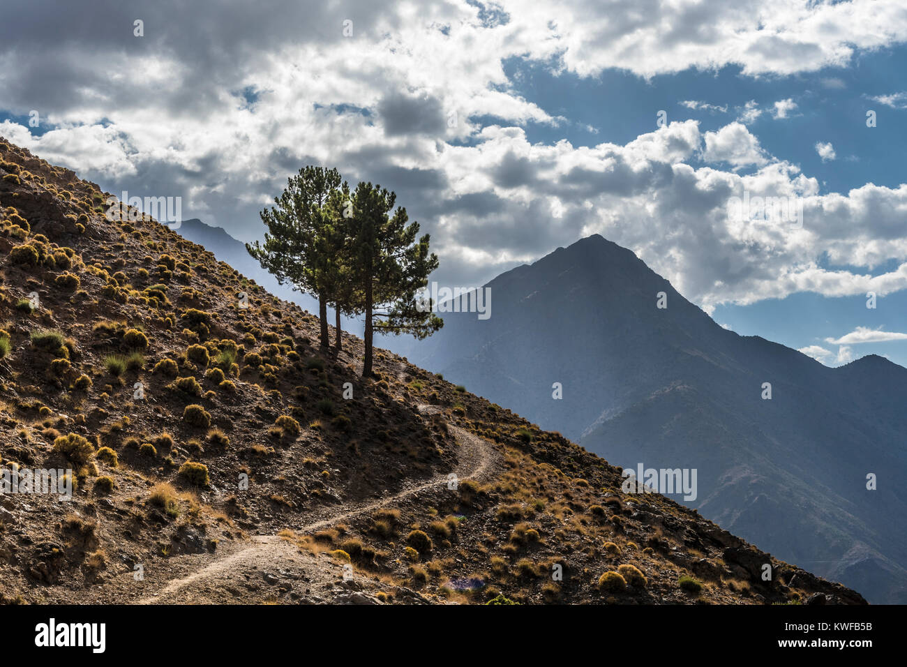 Mountain path with perfectly located lonley tree stand , Atlas Mountains by Imlil, Morocco. Stock Photo